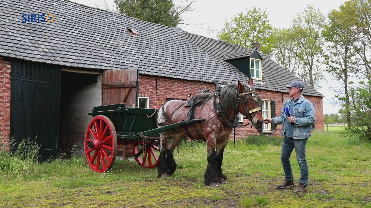 Paardenwereld in Someren