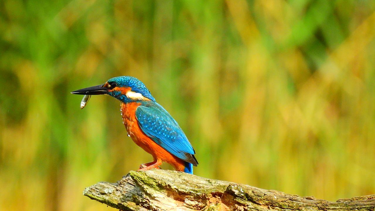 Flora en fauna in augustus