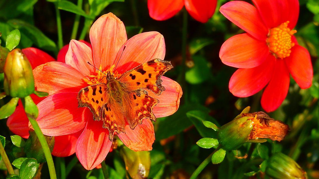Buurttuin Someren-Heide met heel veel vlinders en insecten
